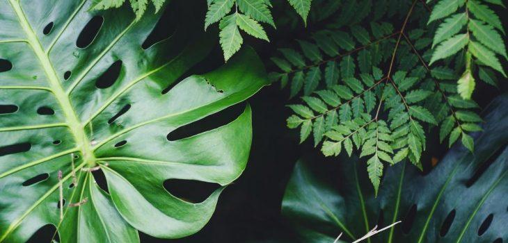 Konstgjorda växter med äkta utseende